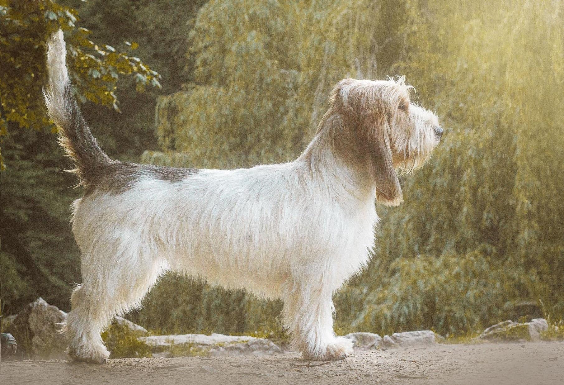 Reggaedog FIONKA