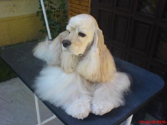 Ch. MADY MAE Moser Dog