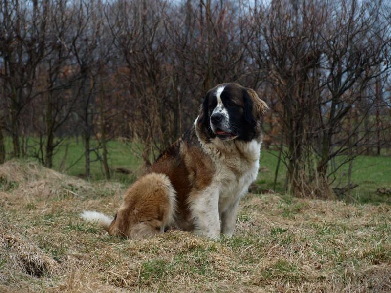 Psík v chovateľskej stanici patrí používateľovi Olga