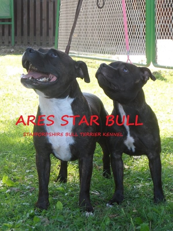 ARES STAR BULL