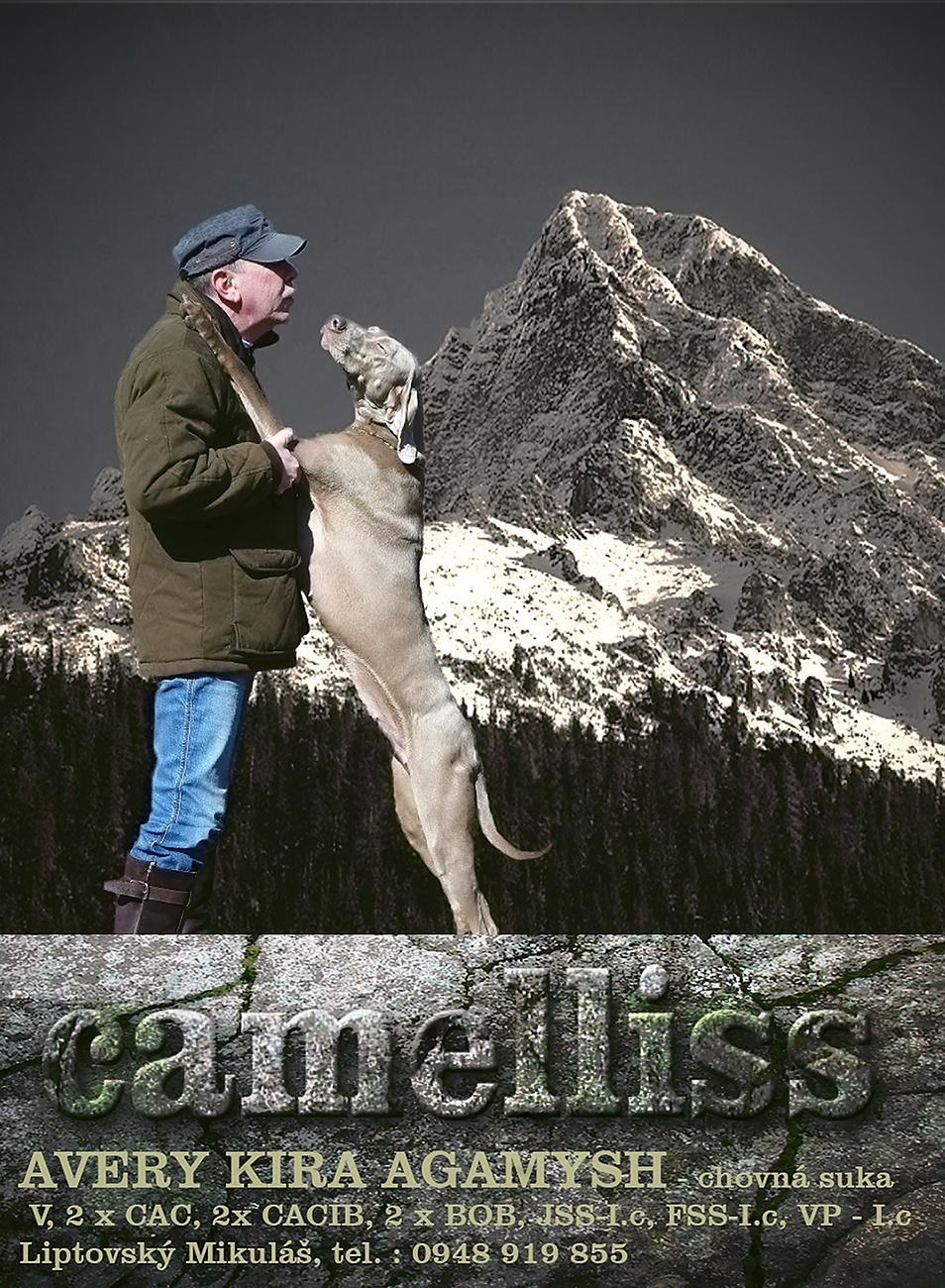 CAMELLISS