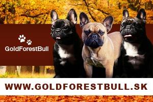 GoldForestBull