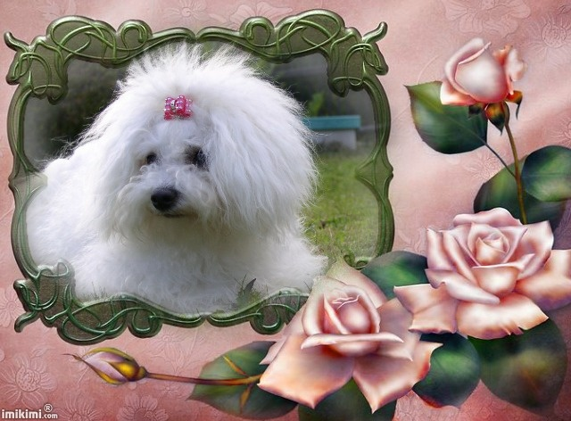 Canis Bohemia