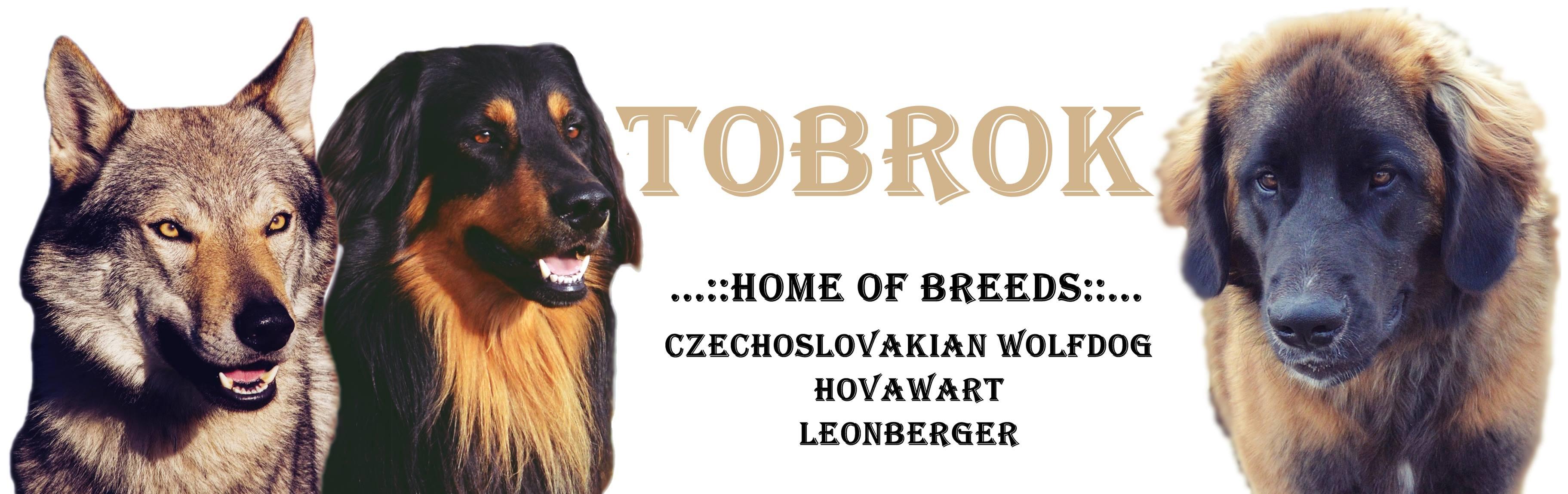 Tobrok