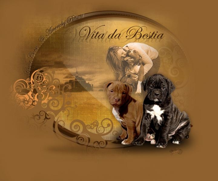 Vita da Bestia kennel