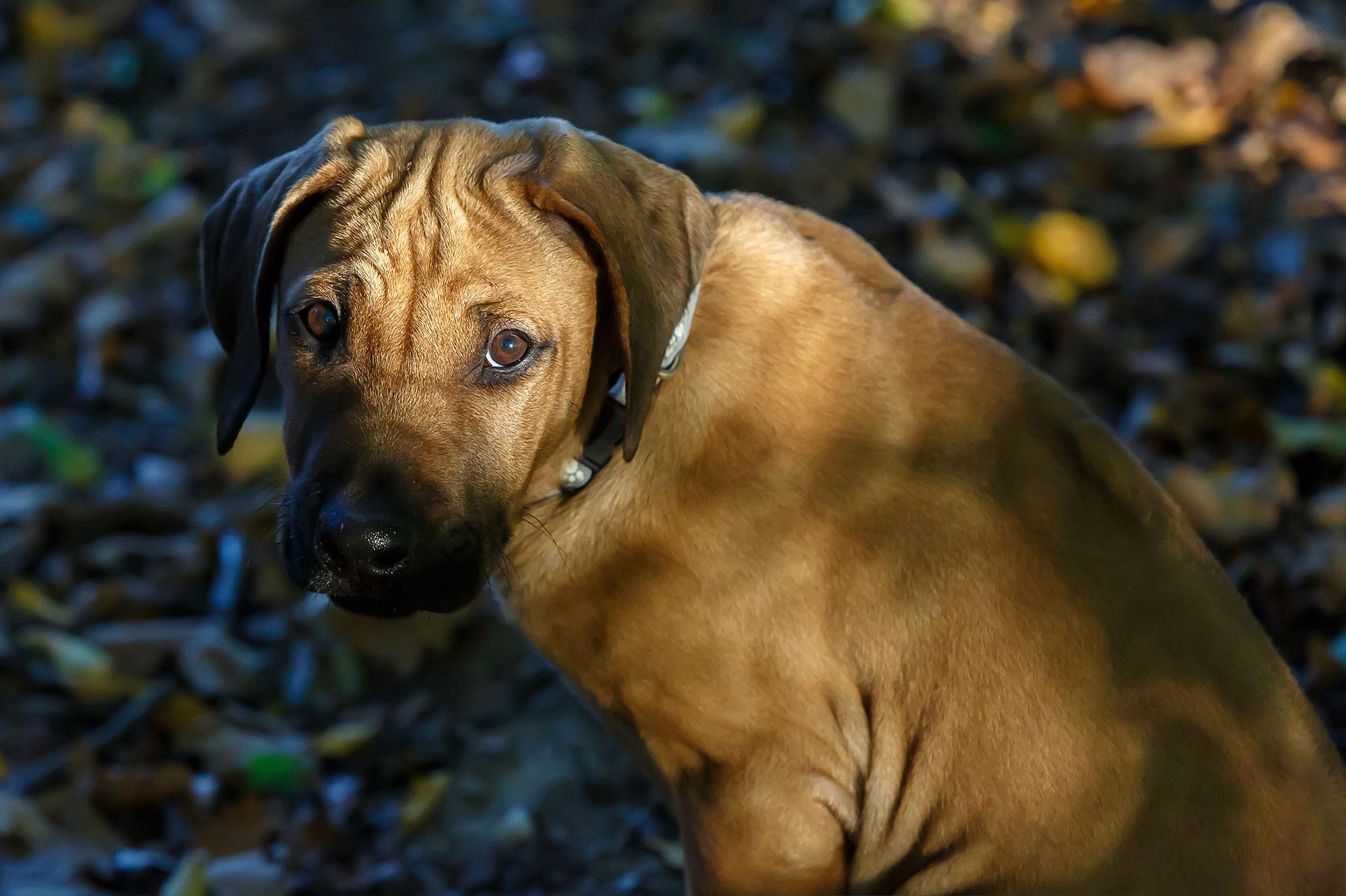 Socializácia šteniatka - II. časť