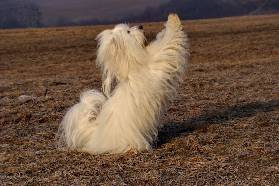 Dogdancing - Chita-Van-El Best of cotton