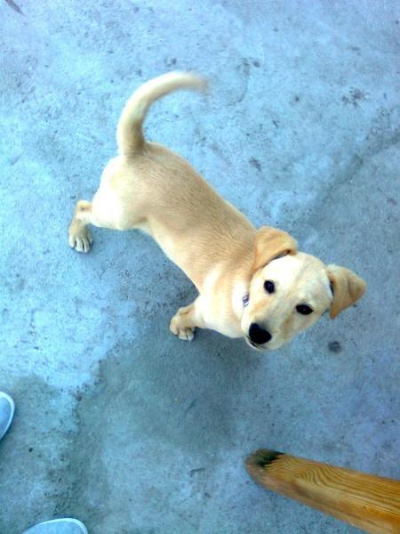 Používateľ Beatka daruje psíka