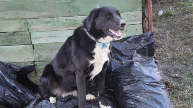 Používateľ cora daruje psíka