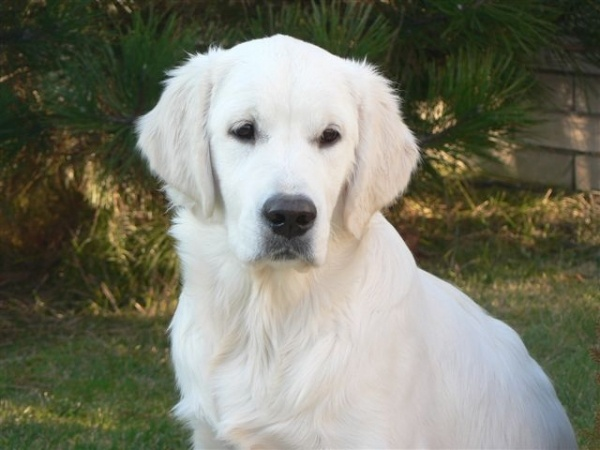 Používateľ JanaS daruje psíka