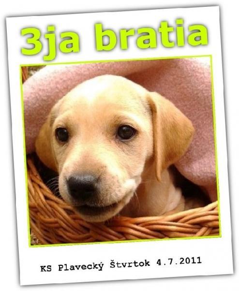 Používateľ KS Plavecký Štvrtok daruje psíka