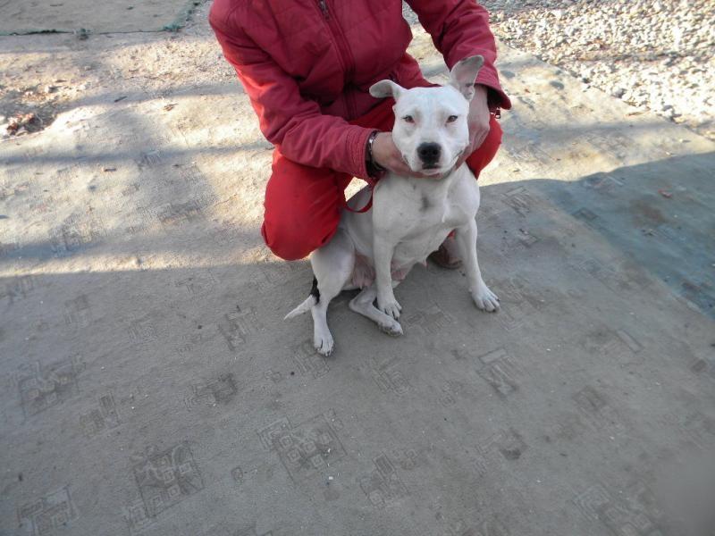 Používateľ Lienka daruje psíka