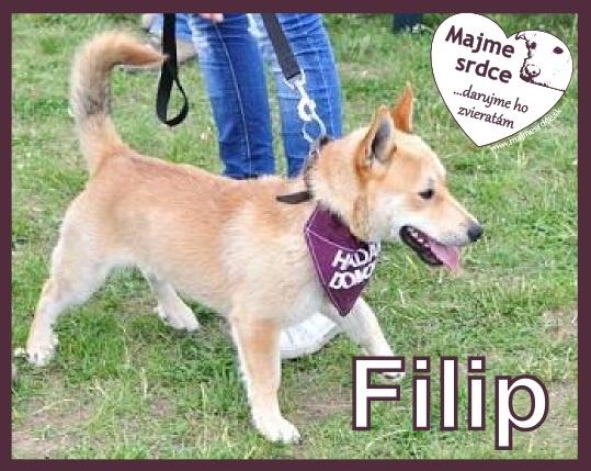 Používateľ www.majmesrdce.sk daruje psíka