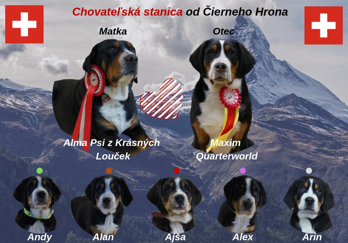 Veľký Švajčiarsky Salašnícky Pes šteniatka