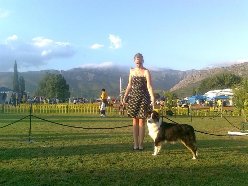 Profil psíka patrí používateľovi Allegro Assai