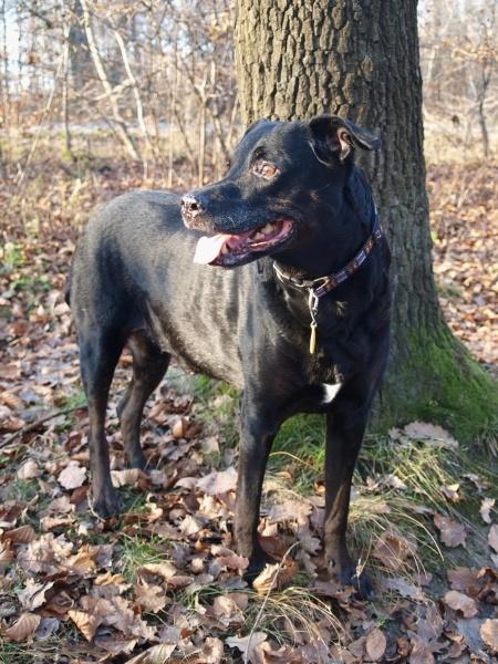 Profil psíka patrí používateľovi bubka
