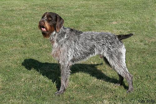 Profil psíka patrí používateľovi dar