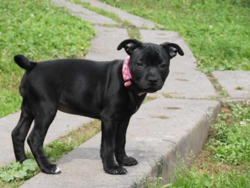 Profil psíka patrí používateľovi Divokysen