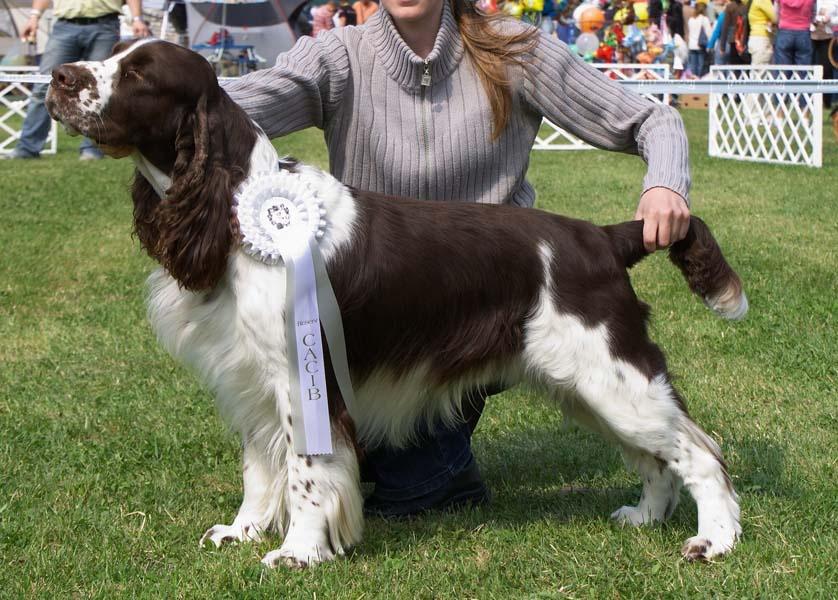 Profil psíka patrí používateľovi ess