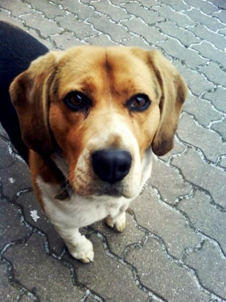 Profil psíka patrí používateľovi Freyja