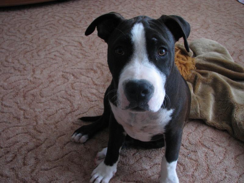 Profil psíka patrí používateľovi helga tkacova