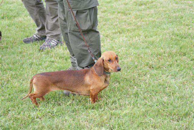 Profil psíka patrí používateľovi Jan Piljan