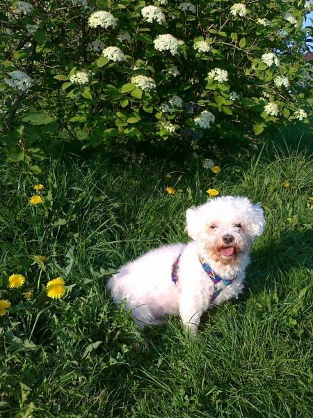 Profil psíka patrí používateľovi Júlia Chreňová