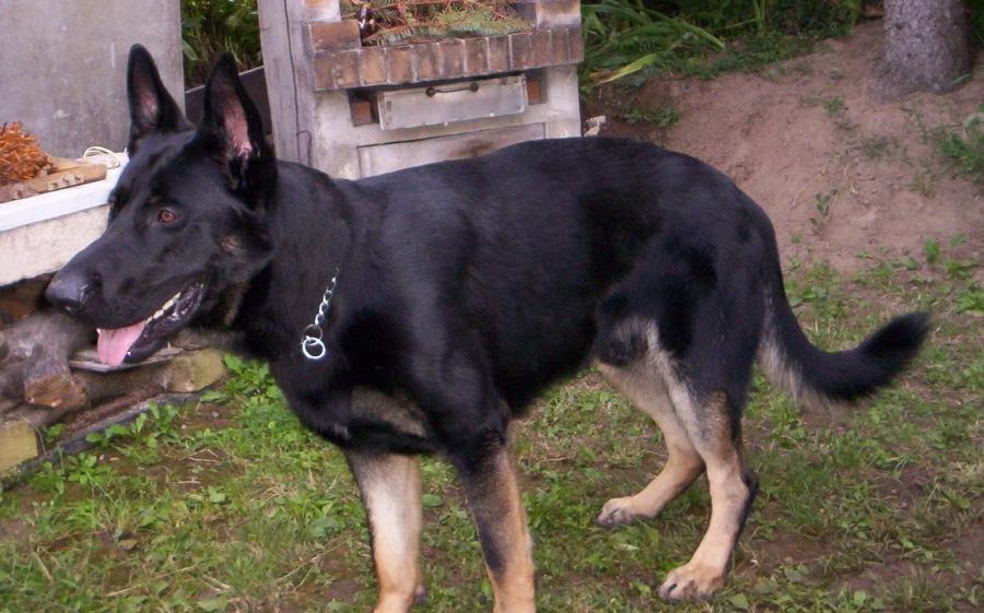 Profil psíka patrí používateľovi Kesy , tak sa volá mama ATOSA .-)