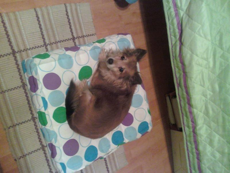 Profil psíka patrí používateľovi Marthina