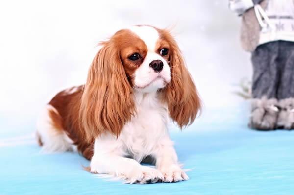 Profil psíka patrí používateľovi marylin