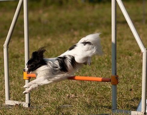 Profil psíka patrí používateľovi Mayo_Dixie