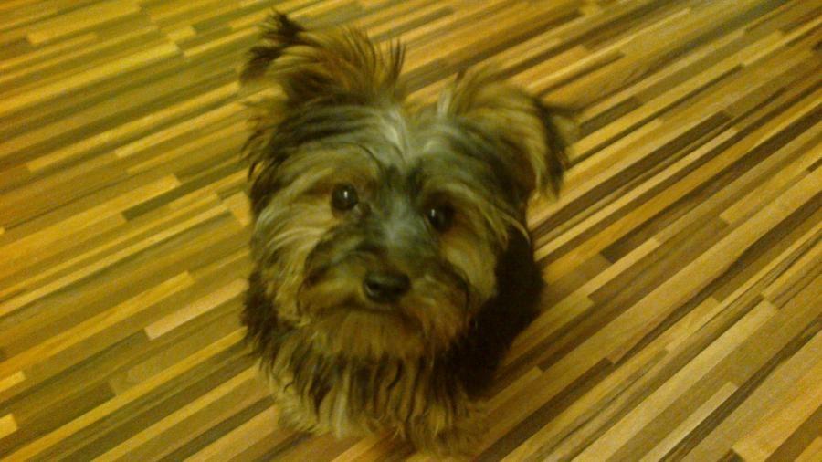 Profil psíka patrí používateľovi Michal Botka