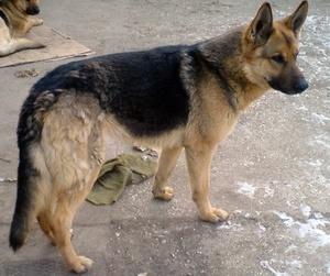 Profil psíka patrí používateľovi Sandra Michalenková