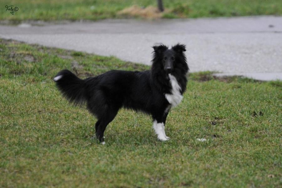 Profil psíka patrí používateľovi ShiShinQa