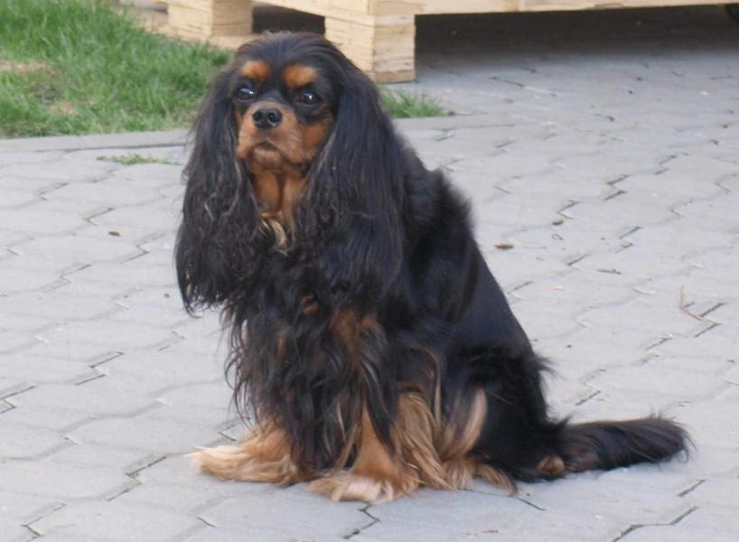 Profil psíka patrí používateľovi Sylvie Schettlová