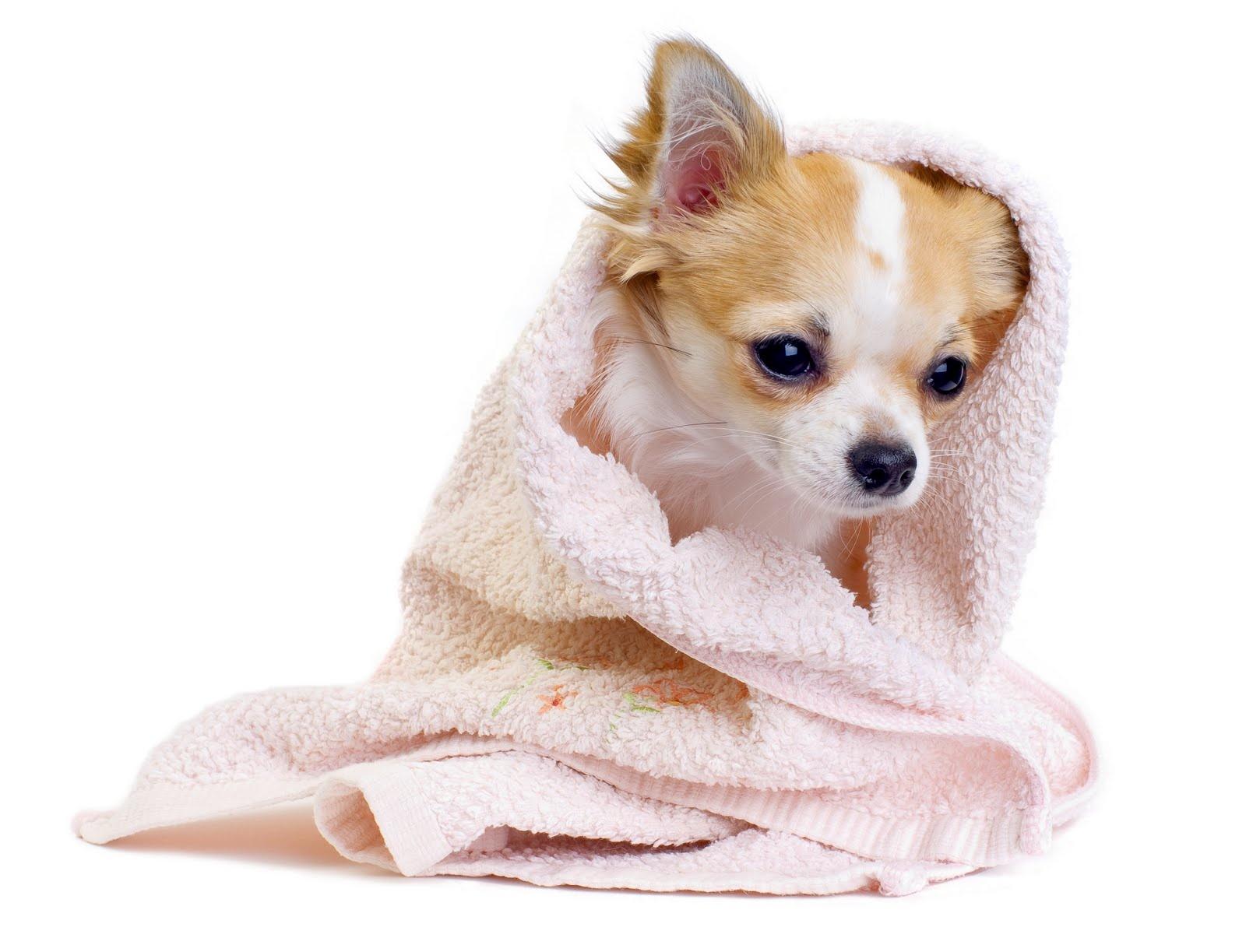 Salón pre psíkov pridal používateľ bella