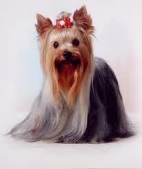 Salón pre psíkov pridal používateľ Silvia Bosnovicova