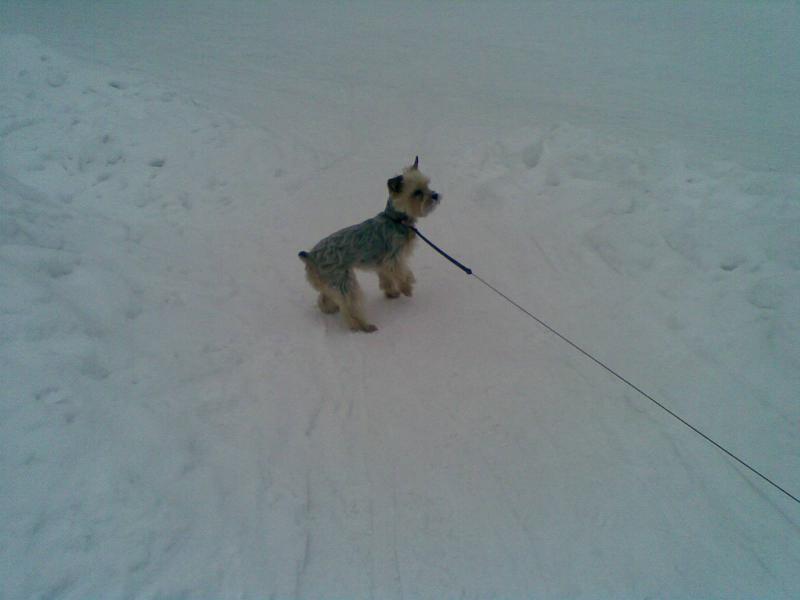 Používateľovi Andrea28 sa stratil psík