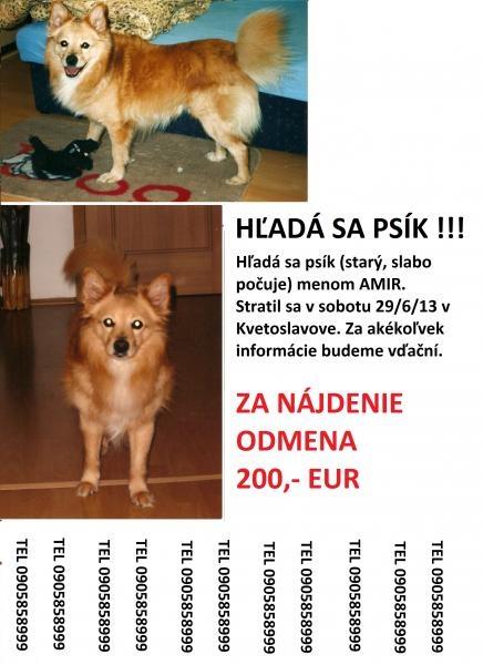 Používateľovi Martina Krajcikova sa stratil psík