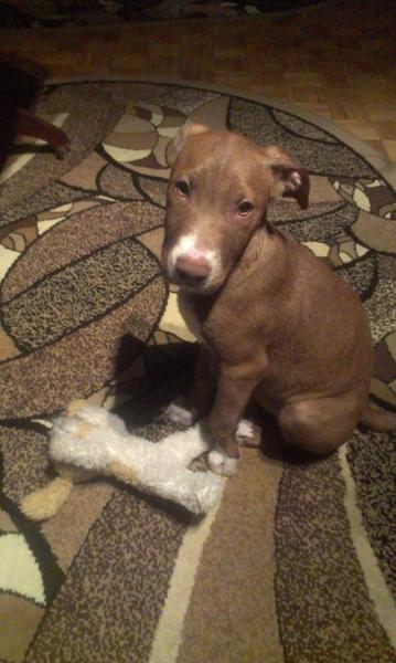 Používateľovi Oľga Balajková sa stratil psík