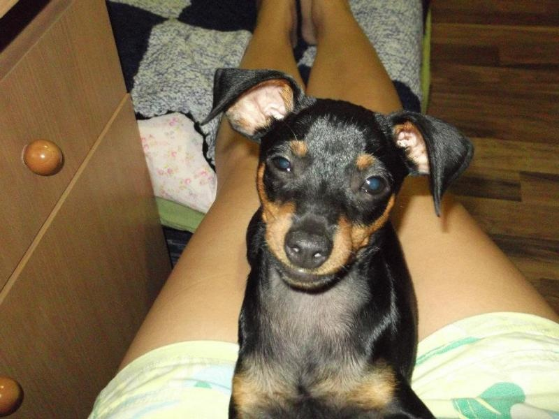 Sratil sa stratil psík v Moste Pri Bratislave