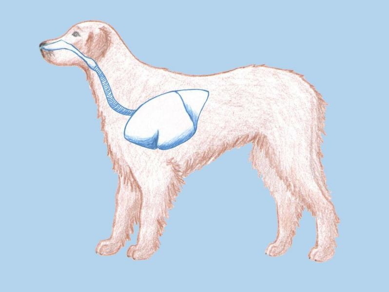 Dýchacia sústava psa