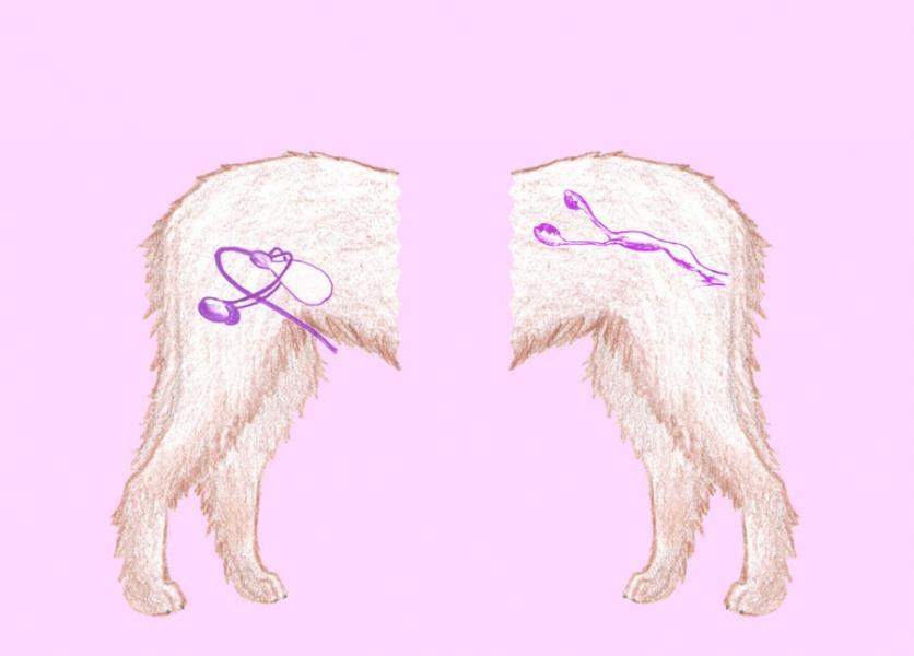 Pohlavná sústava psa