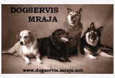 dogservis