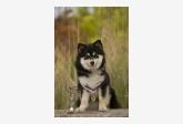 Psík v chovateľskej stanici patrí používateľovi Bonniel-dog