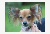 Obrázek naší psí slečinky Polynky