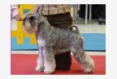 Psík v chovateľskej stanici patrí používateľovi crazy paws