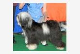 Tento chovný psík bol odchovaný v stanici Khyi-Mi