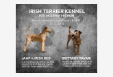 Irish Terrier Kennel Pod modrým vrchom