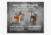 Irish Terrier Kennel Pod modrým vrchom